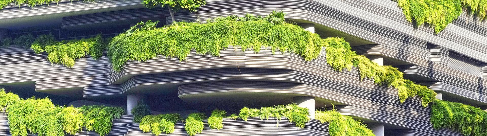 Zielone płuca dla miasta